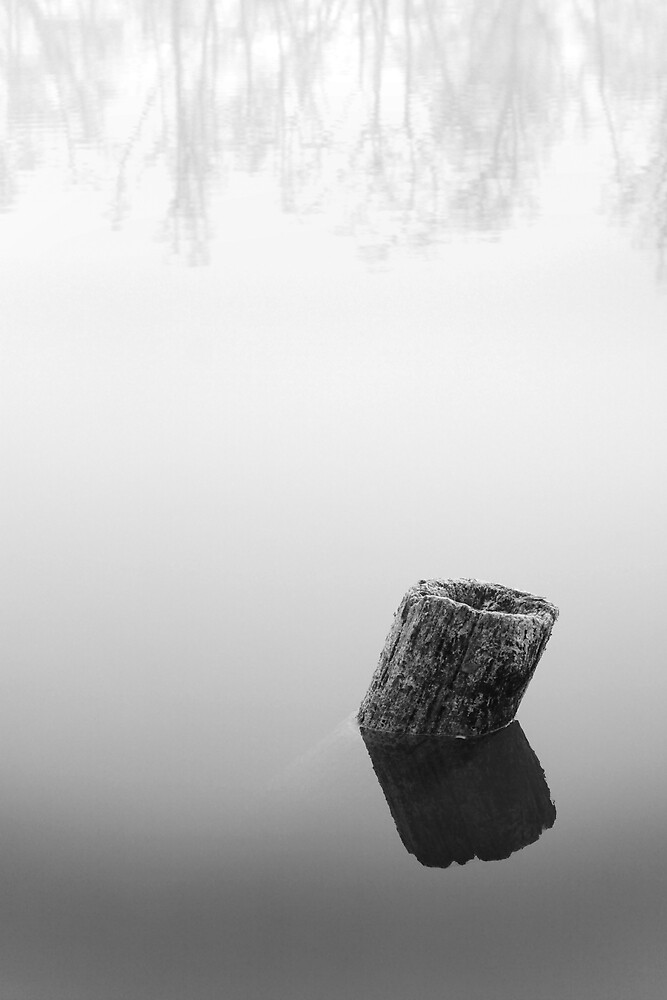 Mist, stump, and reflections by Paolo De Faveri