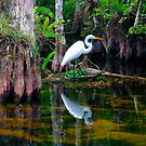 """""""An Egret's World"""" by David Lee Thompson"""
