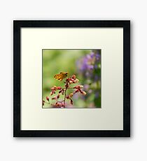 You Looking at Me? Framed Print