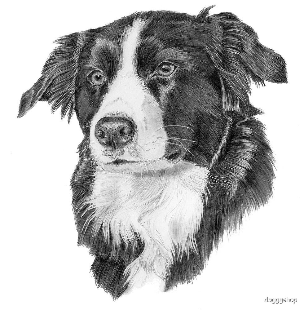 Border collie. English/Scottish dogbreed by doggyshop