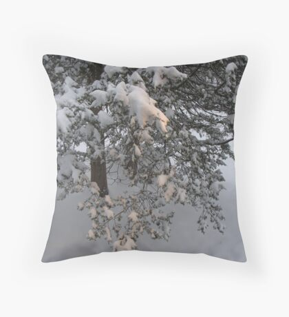 Morning sun shining  on a pine tree. Throw Pillow
