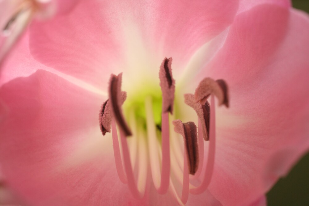 Pink Flower by enish1