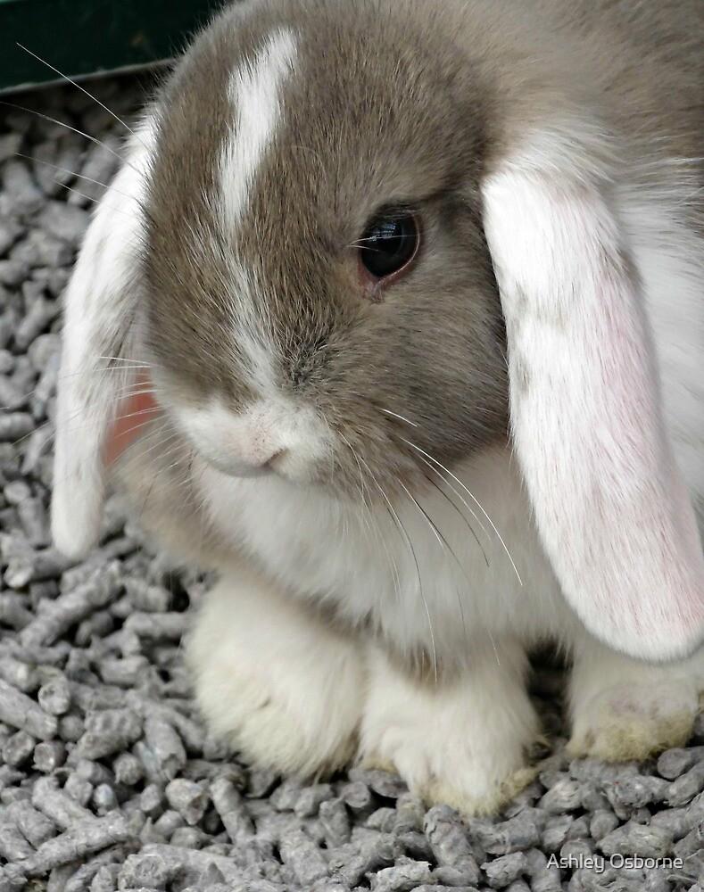 cute lop bunny by Ashley Osborne