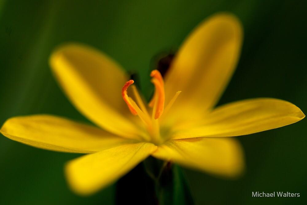 Wild Flower by Michael Walters