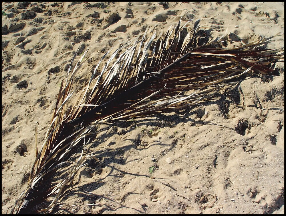 Dried Palm leaf by Photoflirt