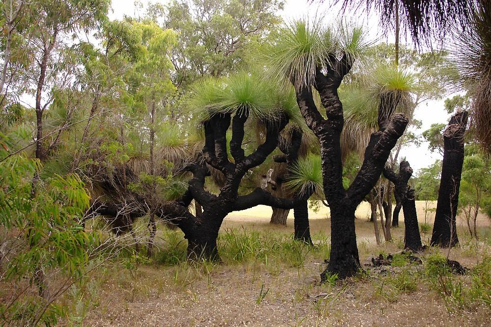 Australian Grass Trees by georgieboy98