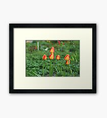 Flowers  red yellow tulips Framed Print