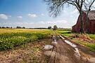 Into the fields by PhotosByHealy