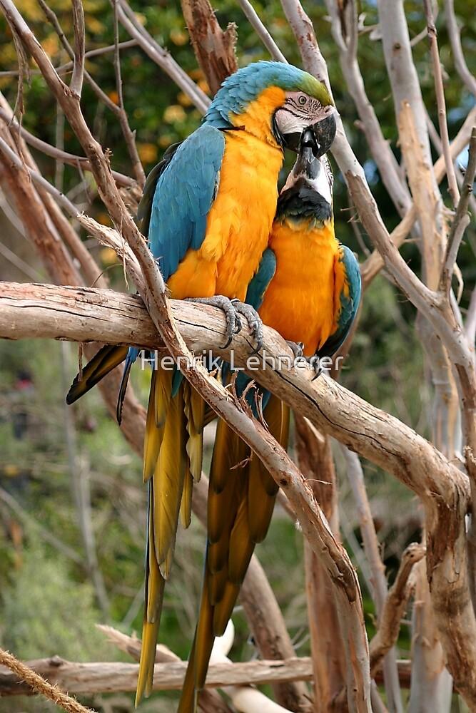 Blue And Gold Macaw by Henrik Lehnerer