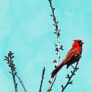Northern Cardinal in Tree by Shawna Rowe