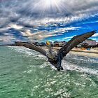 Cormorant Flying by TJ Baccari Photography