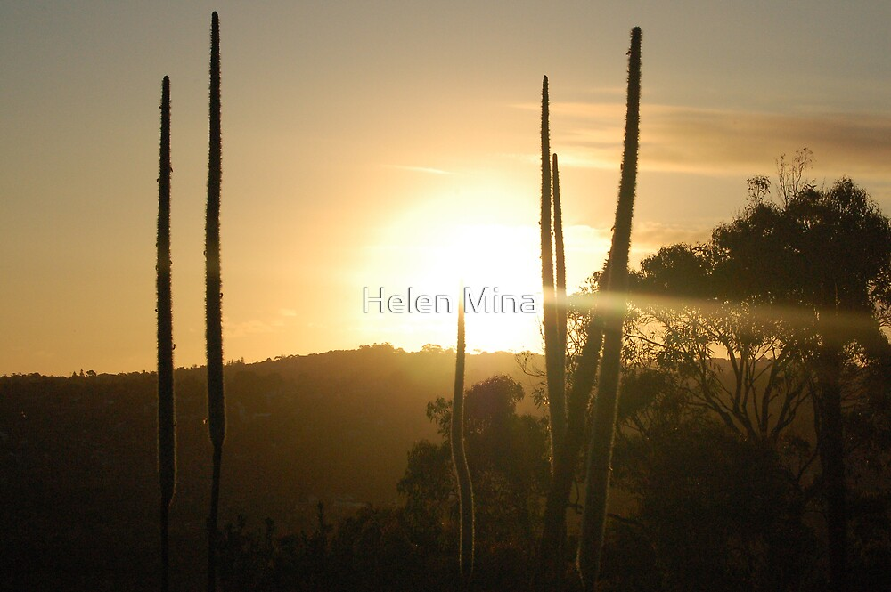 Sunset Hill by Helen Mina