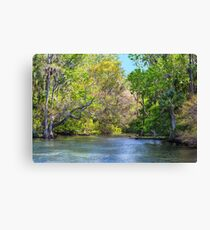 Chassahowitzka River Canvas Print
