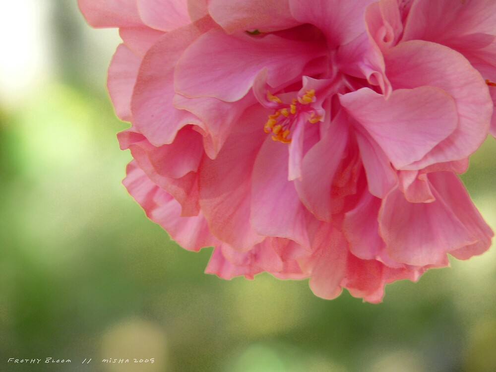 Frothy Bloom by DreamingIce