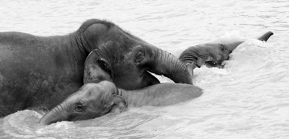 Splish Splash by Kerry Lunt