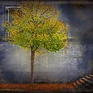 Autumn in town, solitary tree against concrete wall by gameover