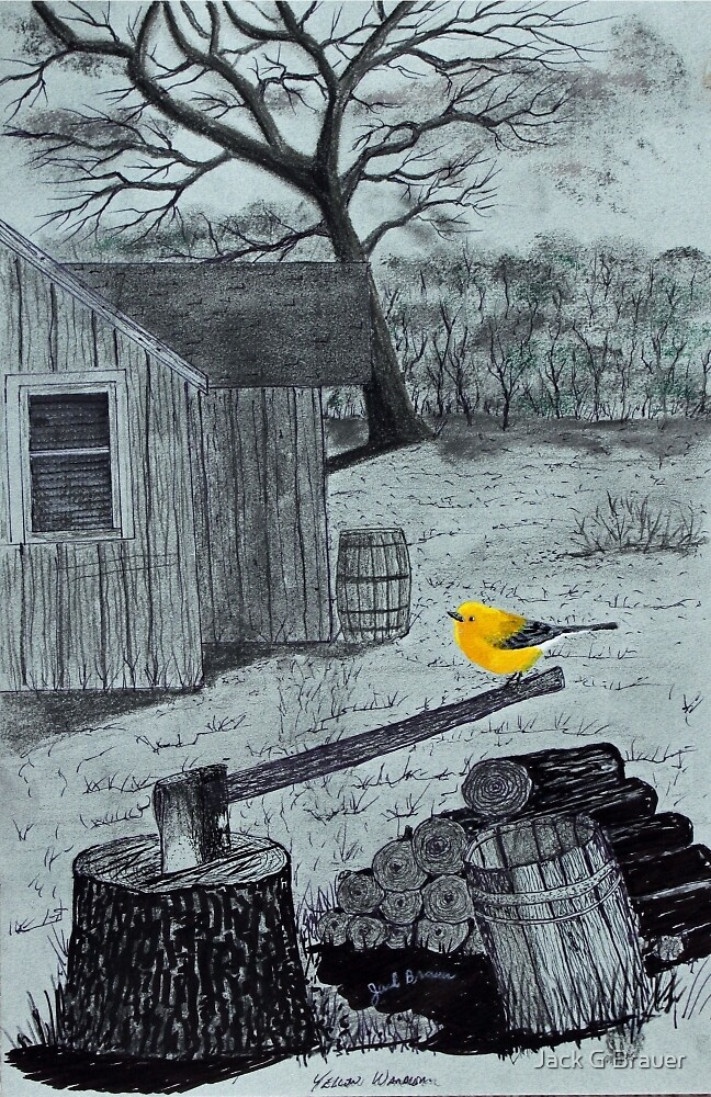 Yellow Warbler by Jack G Brauer