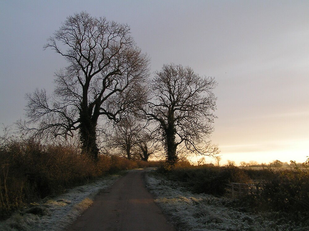 Cooks Lane Trees, Mursley by MursleyMan