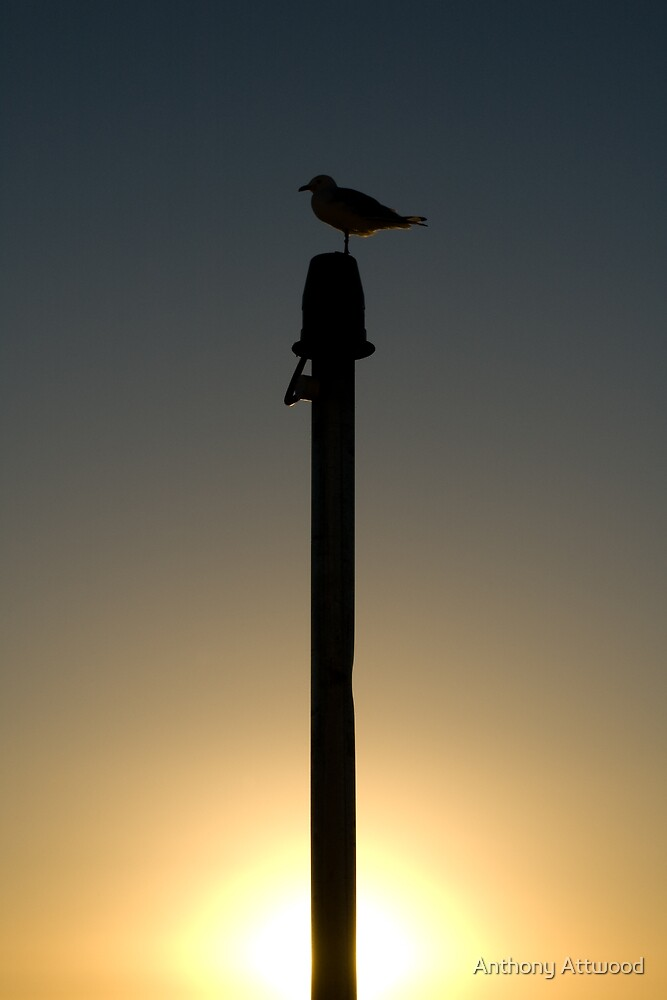 Bird on pole by Anthony Attwood