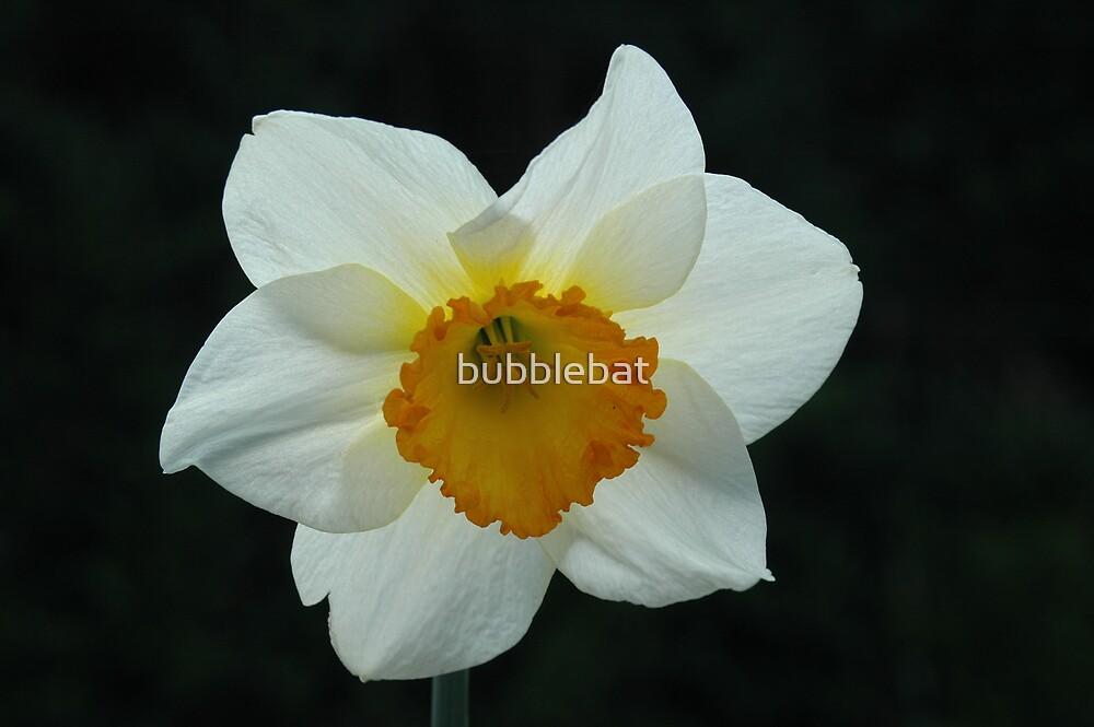 Daffodil by bubblebat