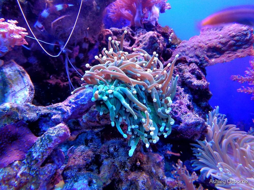 coral reef by Ashley Osborne