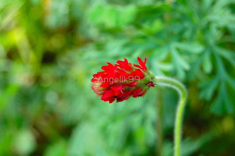 Red Wild Flower by Angelik99