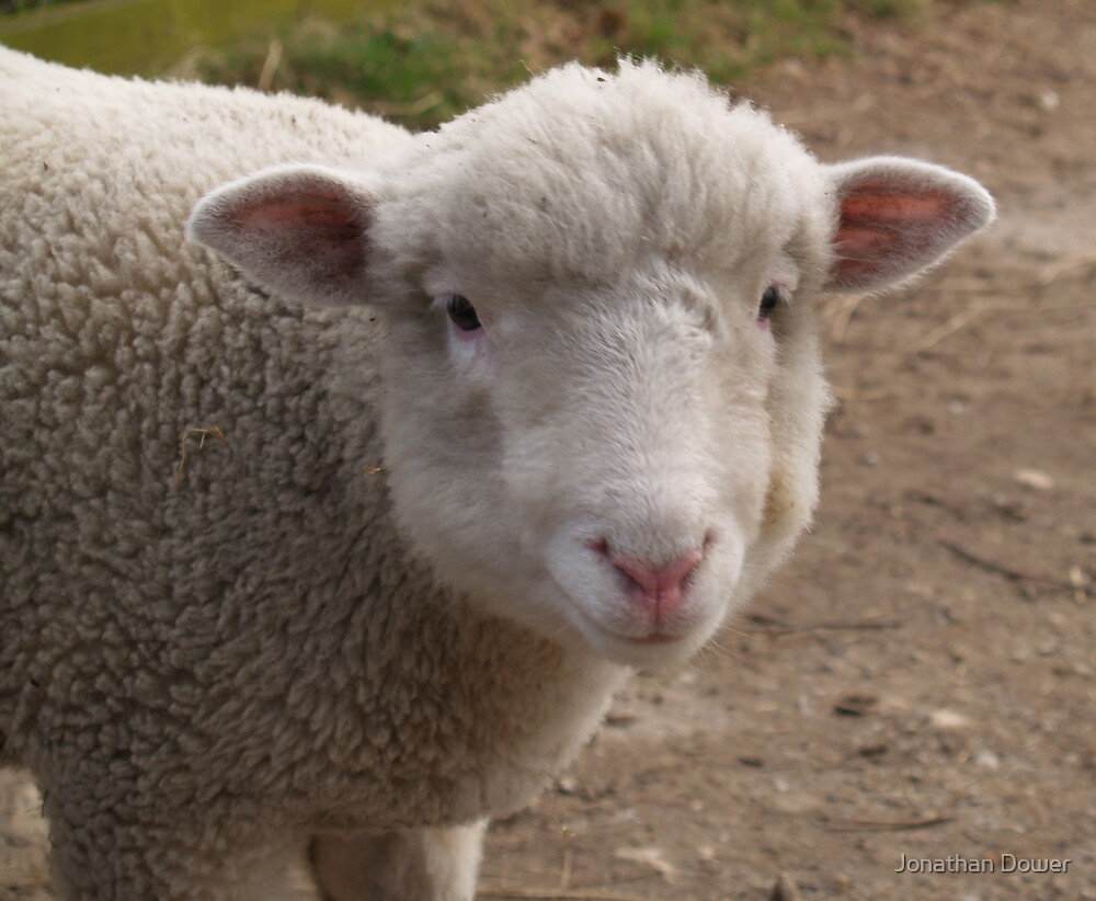 Say hello to the sheep by Jonathan Dower