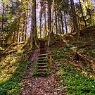 Stairway to the old woodlands by João Figueiredo