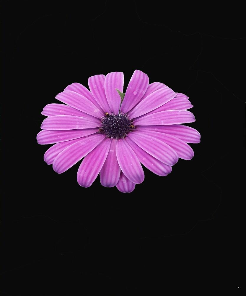 Vintage Purple Flower by Rolando Calderon