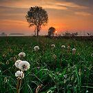 Scalable Dandelions by Paolo De Faveri