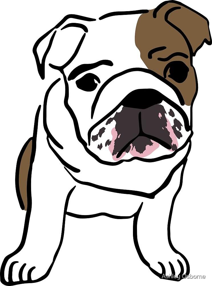 bulldog by Ashley Osborne