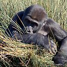 Gorilla in the Grass by ApeArt