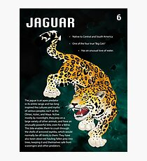 Jaguar Educational Print Photographic Print
