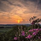 Sunset flowers by JEZ22