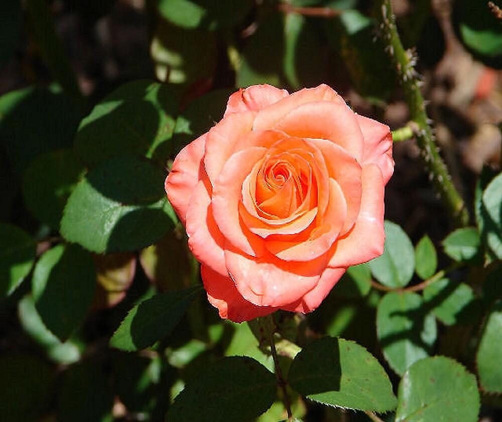 Alabama Rose by shadyuk