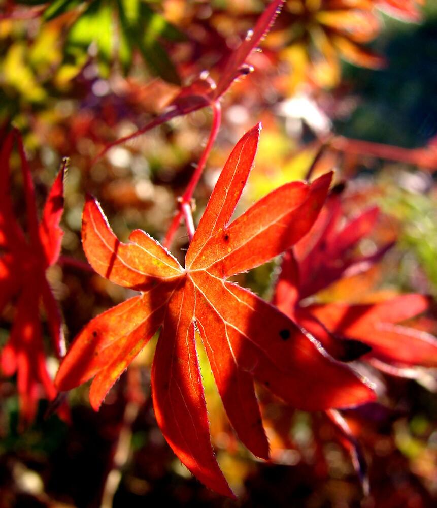 Autumn leaves by evamarina