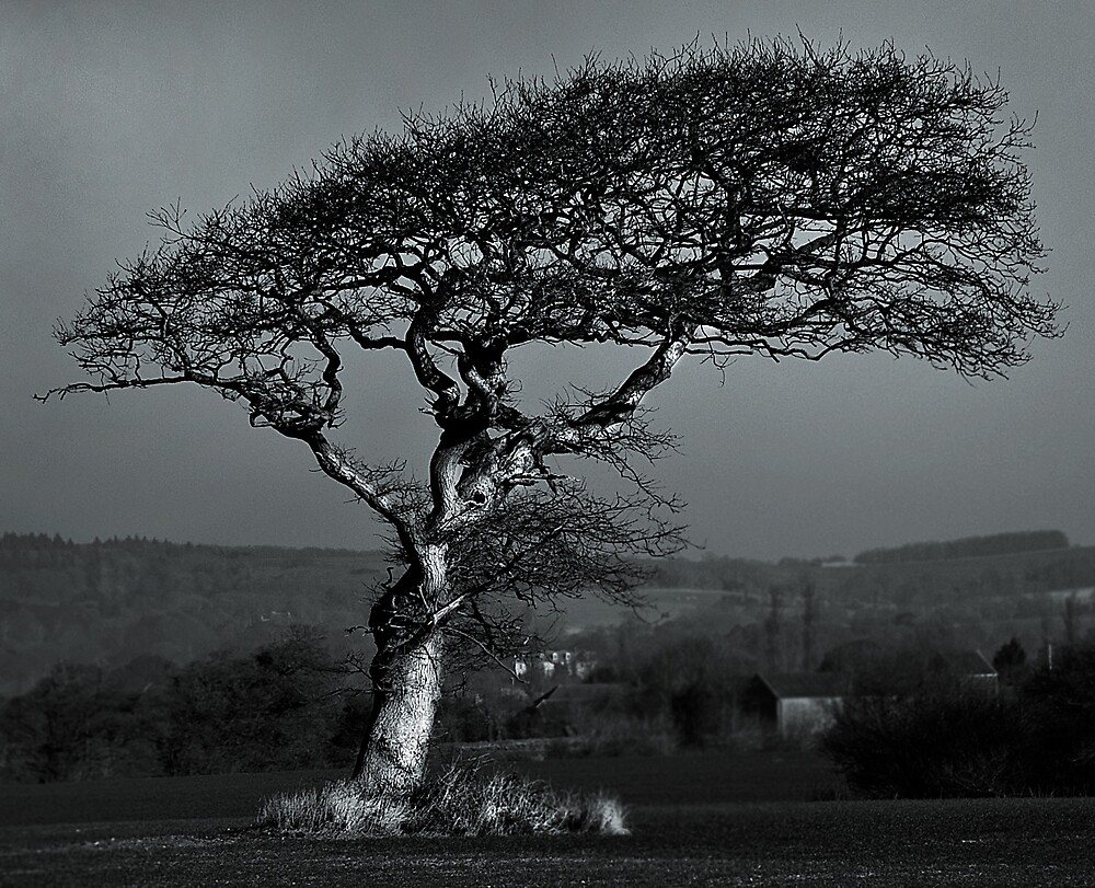 Lone tree by DiOli