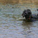 Dog Ball Water by Henrik Lehnerer