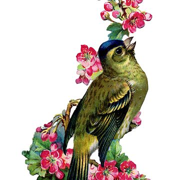 Victorian Scrapbook: Bird with Blossom by carrieclarke