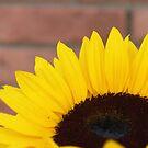Sunflower by Henrik Lehnerer