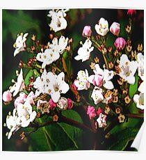 FloralFantasia 23 Poster
