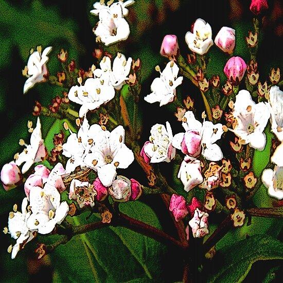 FloralFantasia 23 by Charles Oliver