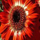 FloralFantasia 26 by Charles Oliver