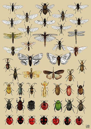 Entomologie Insektenstudien Sammlung von djrbennett