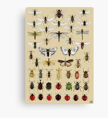 Entomology Insect studies collection  Canvas Print