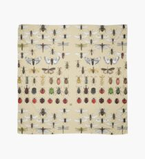 Entomology Insect studies collection  Scarf