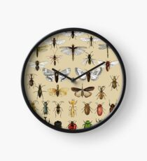 Entomology Insect studies collection  Clock