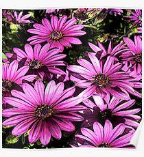 FloralFantasia 27 Poster