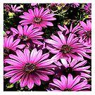 FloralFantasia 27 by Charles Oliver