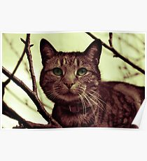 Cat Map Posters  Redbubble